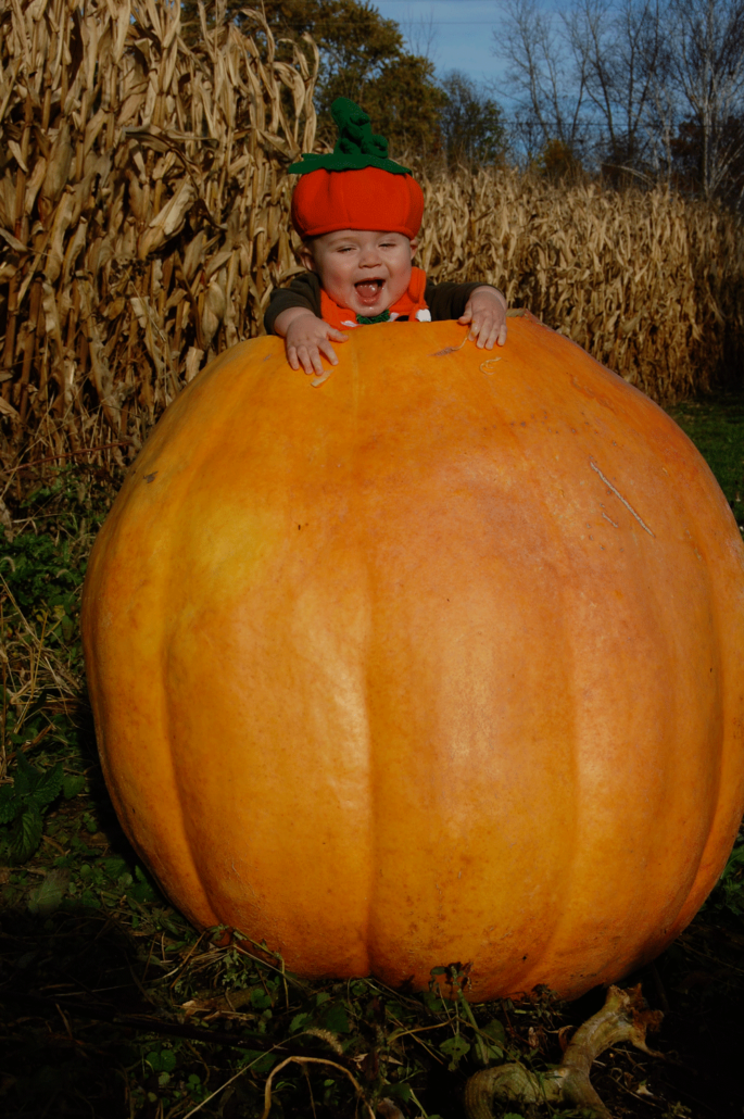 Pumpkin Patch In Radnor Ohio Retail And Wholesale